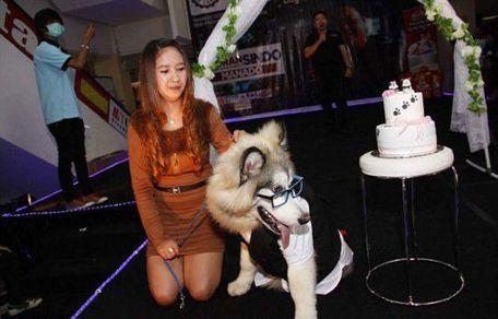 [宠物狗的婚礼]宠物狗的品种